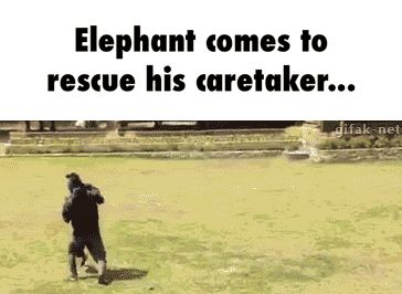 #elephant, #rescuing, #awesome
