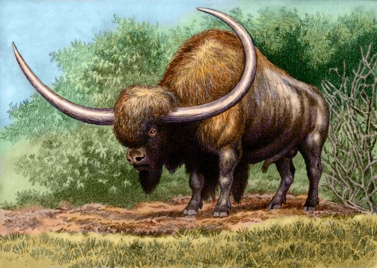 сапоги картинки с древними животными адреса