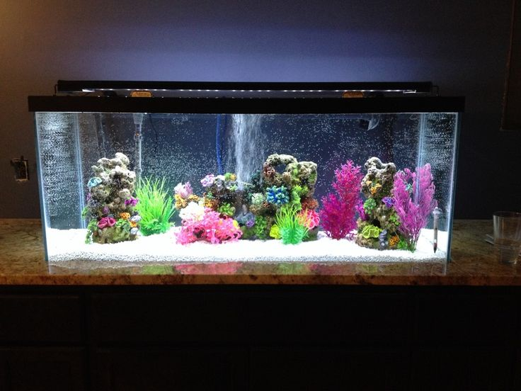 38 best fish tank ideas tips and info images on for Zen fish tank