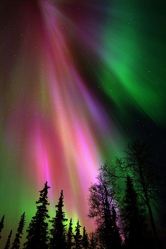Northern lights in Lappish winter