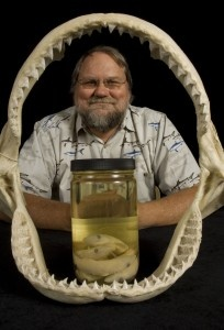 University of Florida, International Shark Attack File reports 2012 U.S. shark attacks highest since 2000: George Burgess, director of the Florida Program for Shark Research at the Florida Museum of Natural History, displays a dusky shark jaw and sharpnose shark embryo specimens in Dickinson Hall on the University of Florida campus. ©Florida Museum of Natural History photo by Eric Zamora