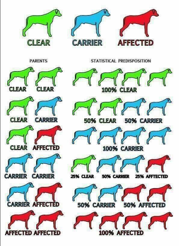 Pin On Dog Cat Health Tips