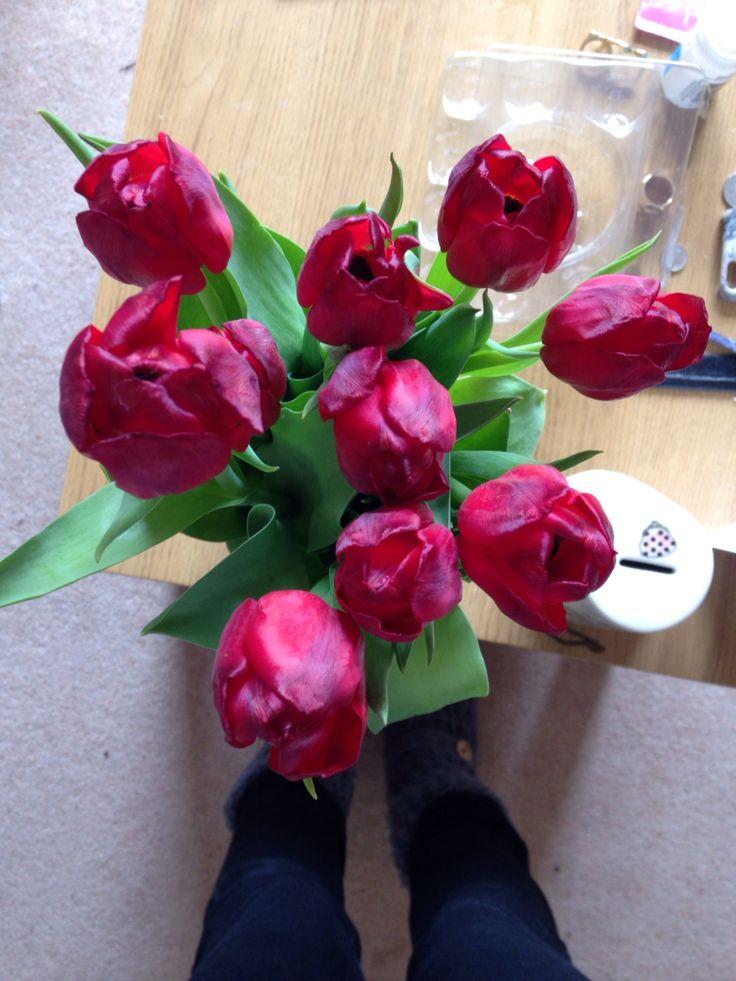 Deep red tulips from my boyfriend. So damn pretty.