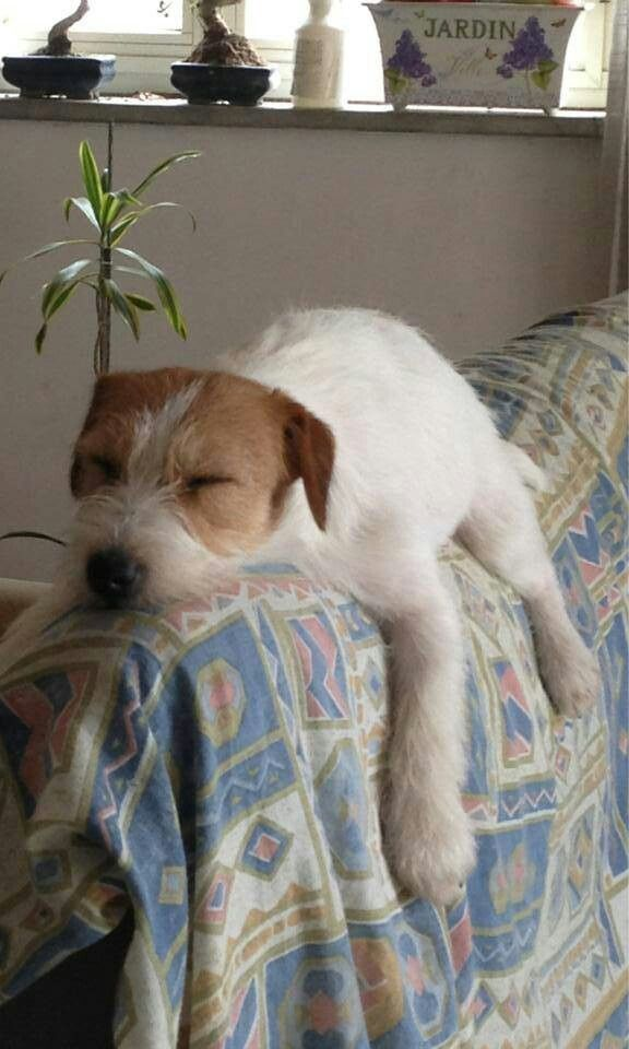 Jack Russell http://forkinrecipes.com