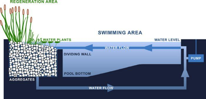 Natural swimming pools are chemical-free. The plant portion- or regeneration zone- is separated from the swimming area by a wall just below the water's surface. Skimmers and pumps circulate water through the regeneration zone that acts as a biological filter of contaminants