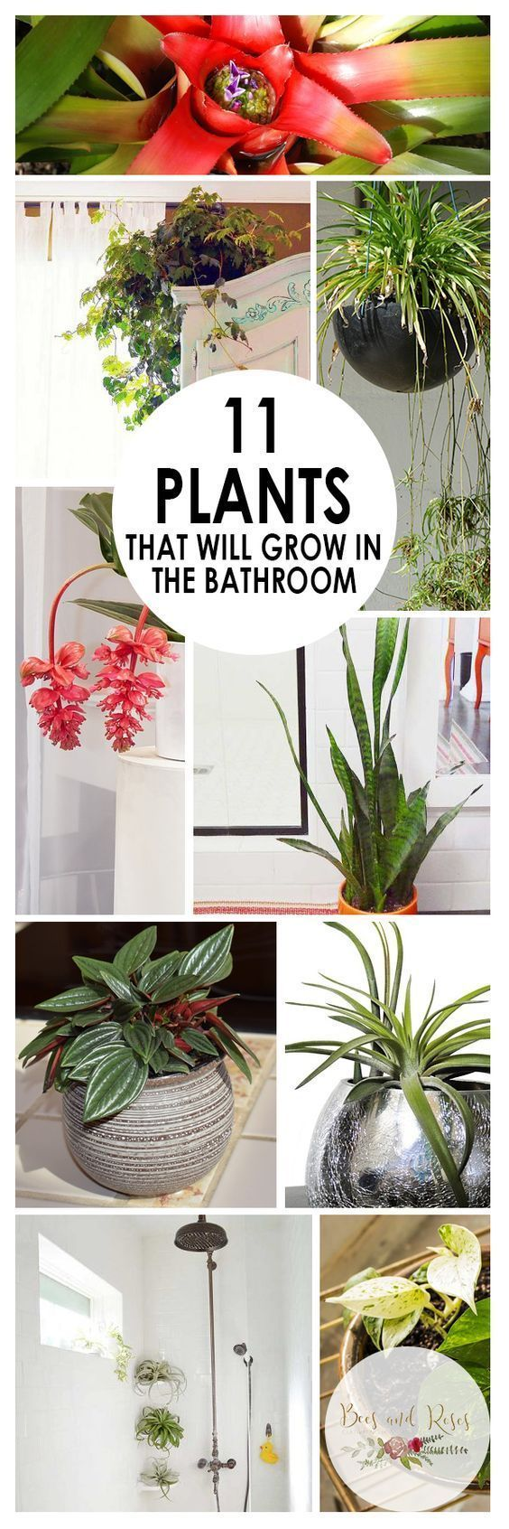 PIN 11 Plants That Will Grow In the Bathroom