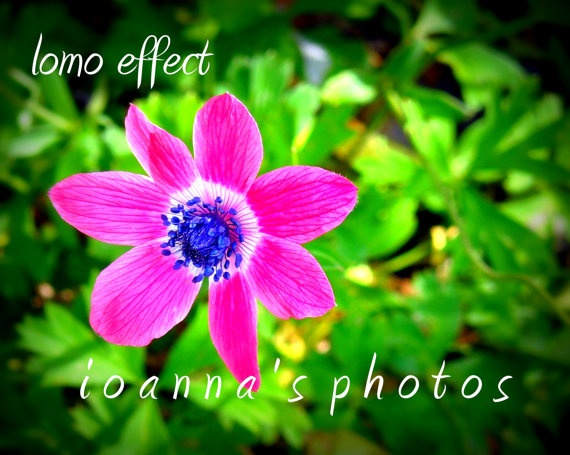 Digital Fine Art Photography Download 8''x10'' by ioannasphotos, $5.00