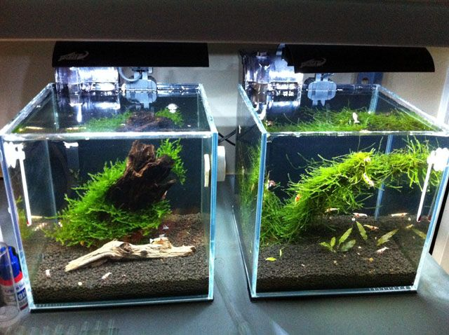 Jake 39 s high clarity shrimp cubes page 5 aquascaping for Shrimp fish tank