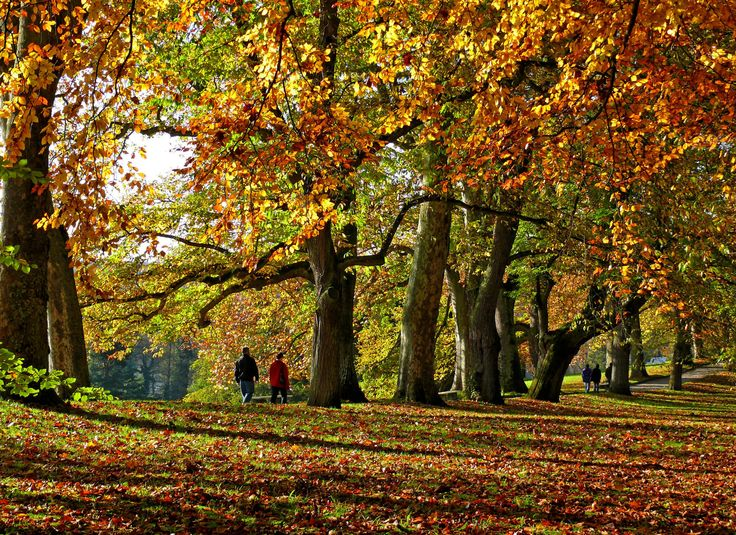 Höstskog, parken