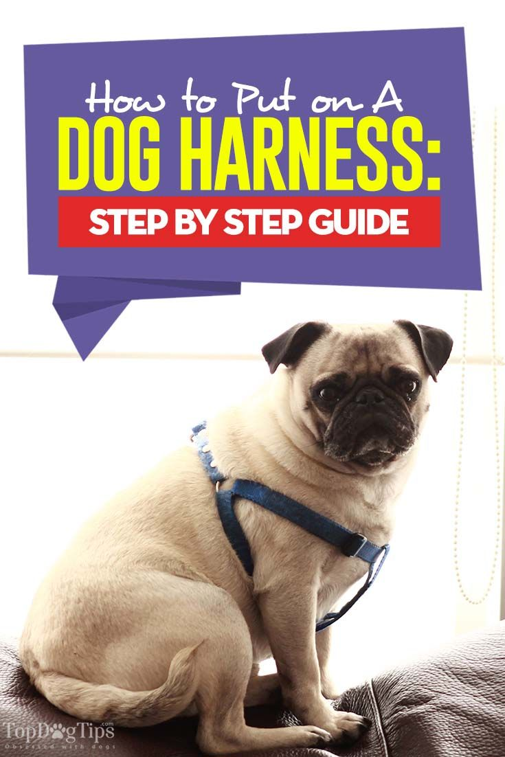 How To Put On Different Types Of Dog Harnesses Dog Harness