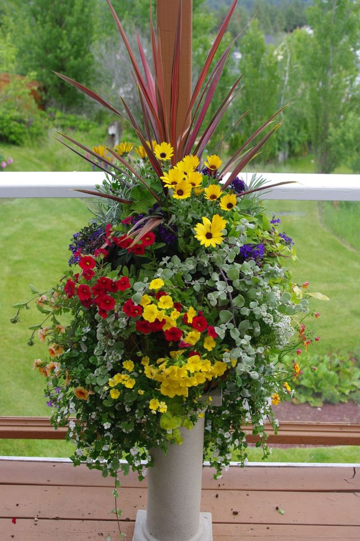Flowers are: Dracaena, Licorice plant, Bacopa, Lobelia, Calibrachoa, Nemesia, Osteospermum, Marine Plant, Golden Globe and Trailing Verbena.