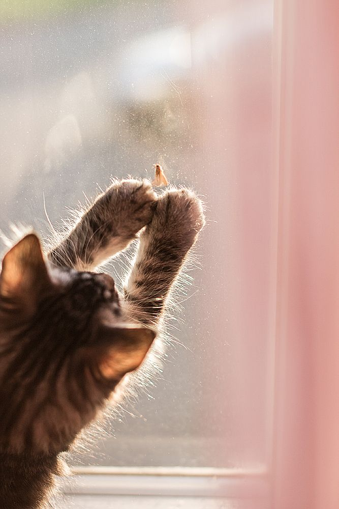 """* * """" If dis blasted insect didn't keeps movin'; me coulds haz him and be victorious. Howz glorious ! """""""