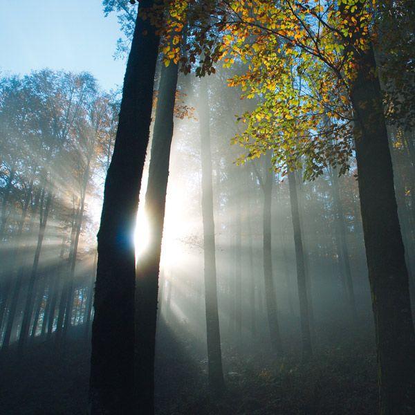 la foresta del #Cansiglio
