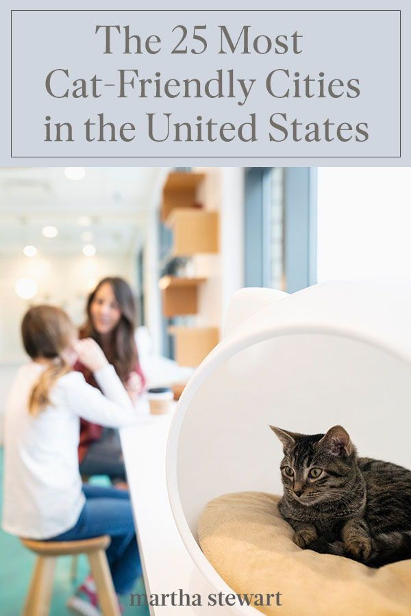 The 25 Most Cat Friendly Cities In The U S In 2020 Cat Friendly Cats Pets