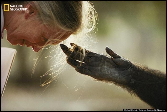 25 melhores ideias sobre Chimpanz no Pinterest