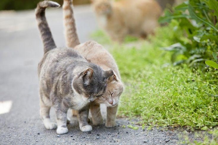 Capturando la vida secreta de los gatos callejeros   Cuidar de tu gato es facilisimo.com