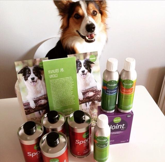 "Look what I got! All the Nutrolin bottles aren't for Finn, he has to share with the rest of the pack that lives with Sweden´s agility stars Isabelle Orenius Emanuelsson and Jouni Orenius. Isabelle´s and Jouni´s motto in agility is ""speed, timing, precision & passion""."