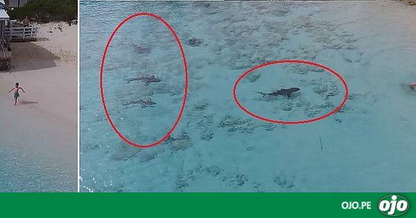 YouTube: niño se salva de ser atacado por cuatro tiburones (VIDEO)