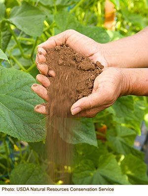 Know Your Plot: How to Identify and Make the Most from Your Soil Type | Eartheasy Blog. Clay, sandy, silty, peaty, chalky, or loamy? Use the water test, the squeeze test, the settle test, and the acid test to find out. Also includes tips on what to add to make the most of your soil, whatever the type.