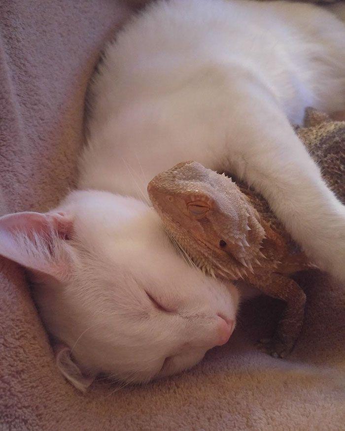 Era uma vez um gato e um lagarto que se tornaram melhores amigos
