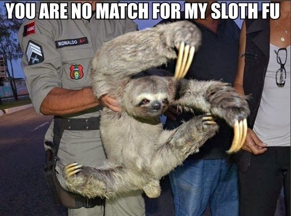 018-funny-captions-017-sloth-you-are-no-match-for-my-sloth-fu.jpg 600×446 pixels