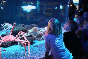Top 3 Attractions in Gatlinburg For Kids - To help families make sure that they get the most out of their family vacation, we at Timber Tops Luxury Cabin Rentals have put together a list of the top three attractions in Gatlinburg that are perfect for families traveling with children. Click pin to read more!