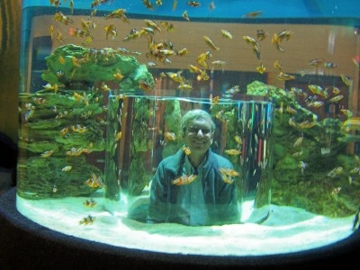 Looking at the tank from the inside out dream fish tanks for Travel fish tank