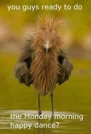 Wonder what kind if bird this is.