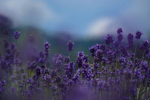 Paint the world purple