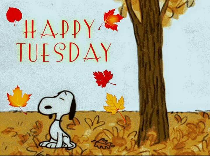 Pin by D'Lynn Long on Peanuts   Tuesday quotes, Happy