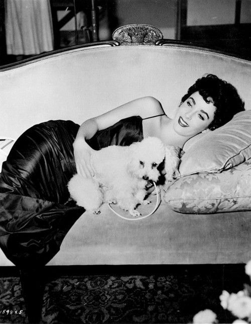Elizabeth Taylor with white toy Poodle