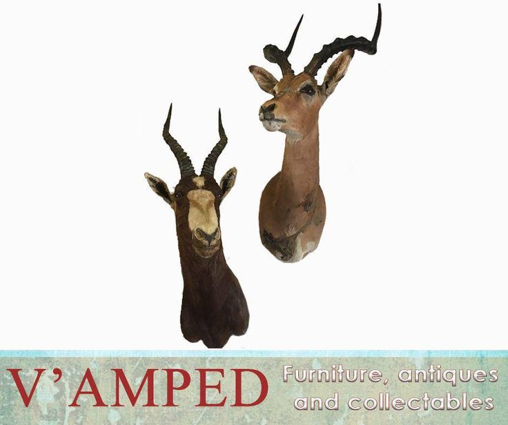 Get this pair of trophy mounts, available from #VampedFurniture. Contact Rory on 076 983 4008 for more information. Delivery available nationwide on arrangement.