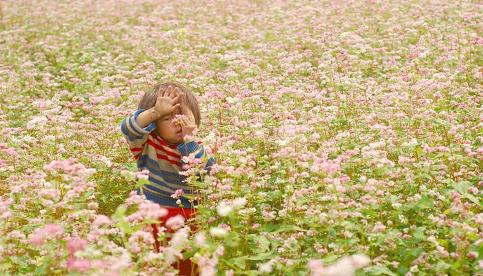 If you love the endless buckwheat flower fields, have a plan to Ha Giang in the Northwest of Vietnam. There will be the great buckwheat flower festival in Oct this year when the buckwheat flowers bloom.