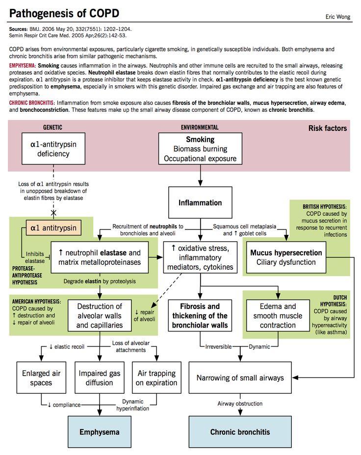 COPD pathogenesis emphysema, chronic bronchitis http