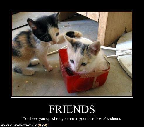 : Little Boxes, Funny Pics, Funny Pictures, Pembroke Welsh Corgi, Funny Friends, Furry Friends, Animal, Cat Memes, Calico Cat