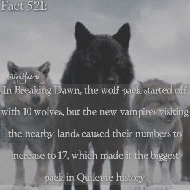 WEBSTA @ twilightfactss - ~That moment when you had the chance to get tickets to meet Anna Kendrick on her book tour but your mom was reluctant and the next time you asked her, the tickets got sold out-Autumn{#twilightsaga#breakingdawn#breakingdawnpart2#quileute#wolves#twifact521}