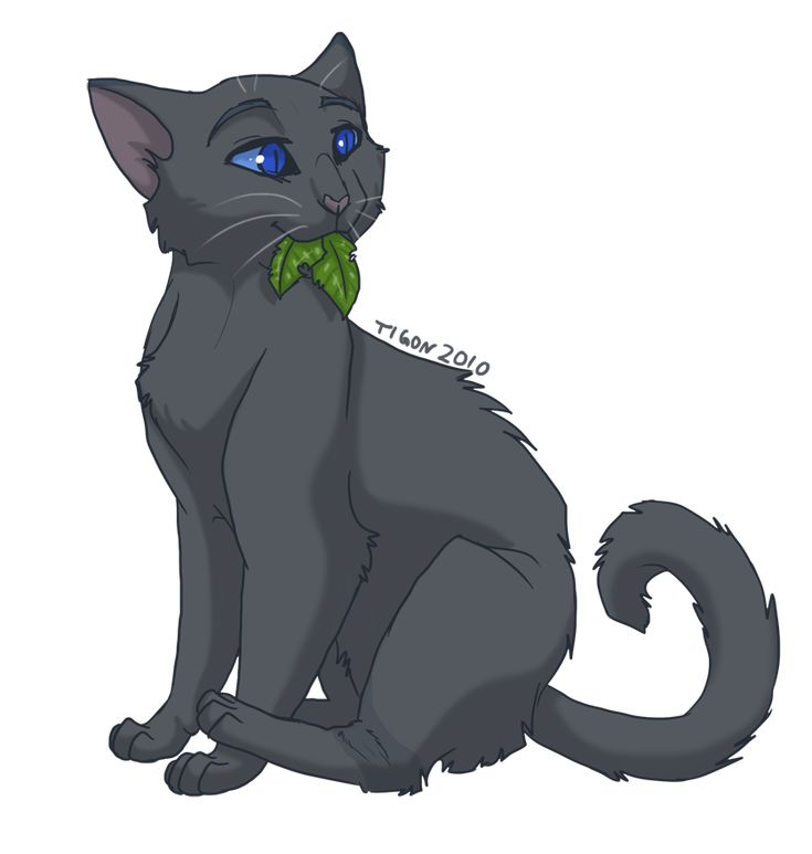 48 Best Images About Warrior Cats On Pinterest