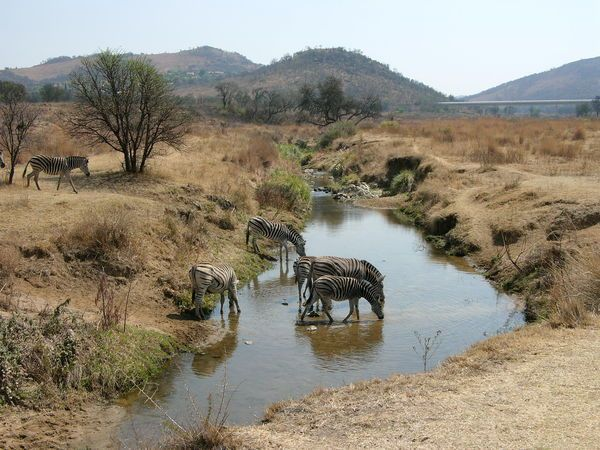 Hiking through Kliprivier Nature Reserve. Can combine with lunch at Thaba Eco lodge and a play with the lion cubs