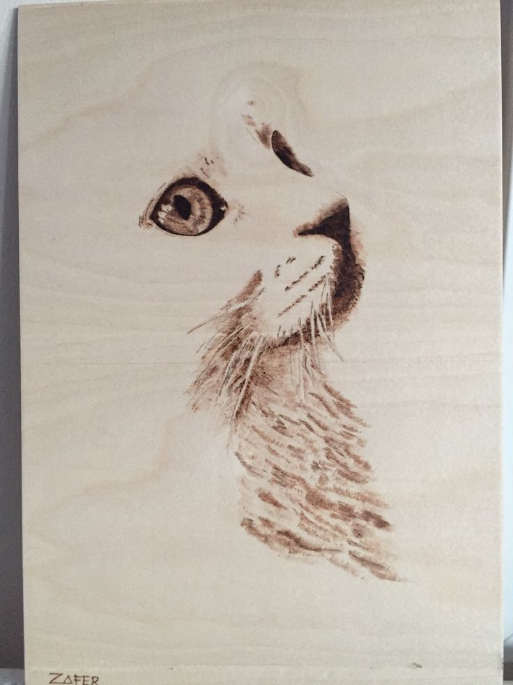 Pyrography An innocent Cat