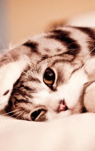 Wallpaper Keren Kucing Lucu Wallpaper Hp Wallpaper Keren Wallpaper 3d Gambar Animasi Screensaver 1600 Cute Cat Wallpaper Cute Cats And Kittens Cat Wallpaper
