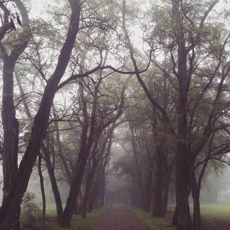 #mgła #fog #jesień #fall #autumn #cisza #silence