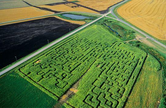 Corn maze, Manitoba, Canada