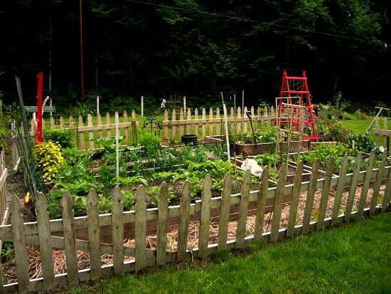 Vegetable Garden White Picket Fence