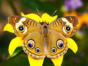 Uyum ve simetri