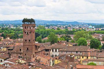 Guinigi Tower , Lucca