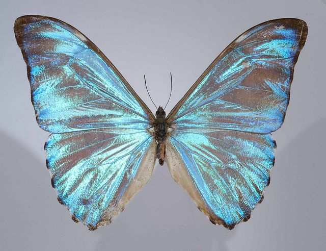 Neotropical Lepidoptera Course 2013. ............ Home page: http://www.cebioperu.org/courses/lepidoptera-2013.php