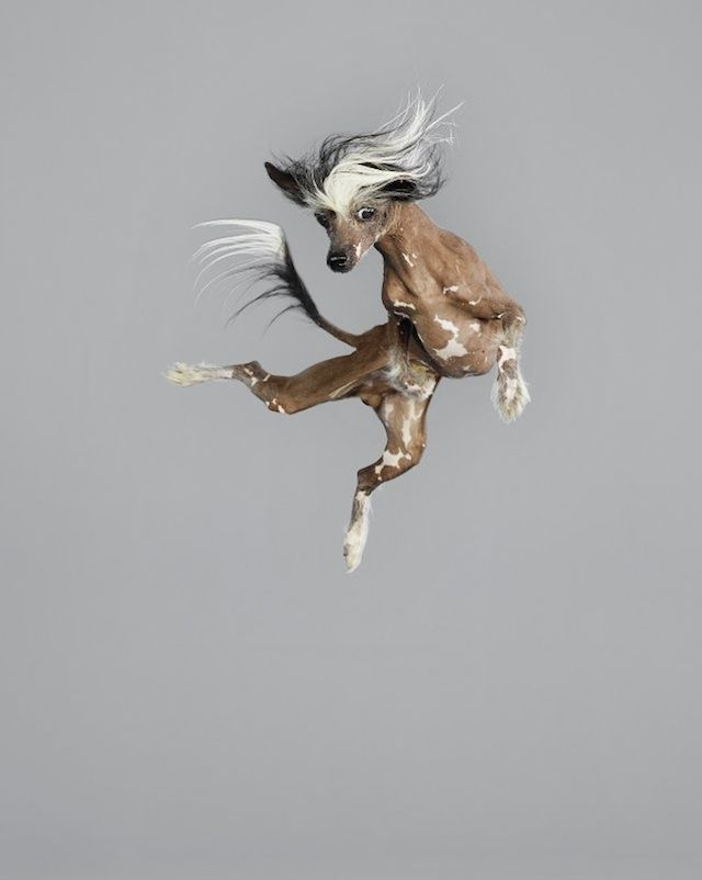 Jumping Dogs Series - Julia Christe