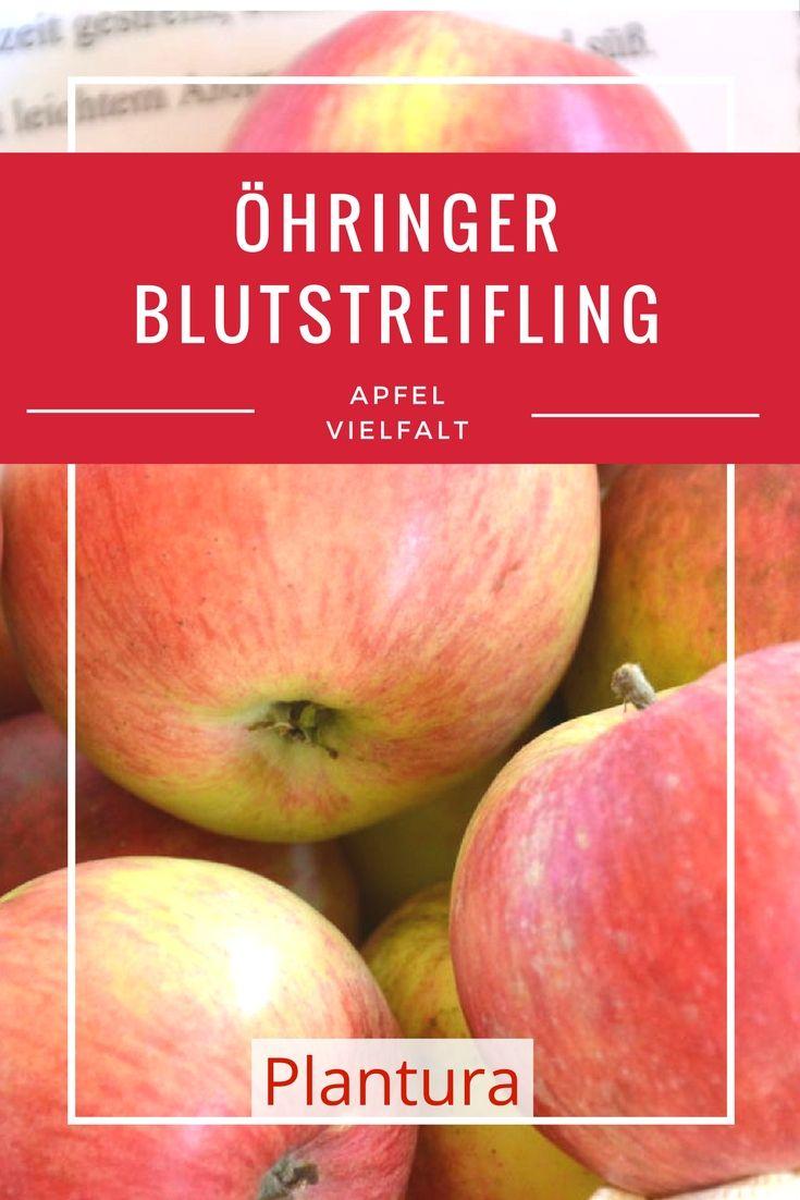 Der kleine bis mittelgroße Apfel besitzt festes saftiges Fruchtfleisch; süßfruchtig im Geschmack mit leichtem Aroma.
