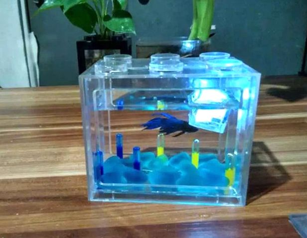 25 best ideas about mini aquarium on pinterest small for Buy fish tank