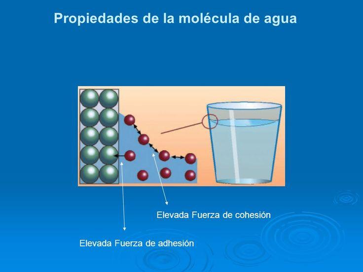 Los líquidos presentan características como la cohesión y la adhesión. * COHESION: La cohesión es la atracción entre moléculas que mantiene unidas las partículas de una misma sustancia. Es decir la atracción de partículas adyacentes dentro de un mismo cuerpo. En el agua la fuerza de cohesión es muy alta debido a los fuertes puentes de hidrogeno que forman una estructura líquida compacta casi incompresible. *ADHESIÓN: Es la interacción entre la superficie de diferentes cuerpos…